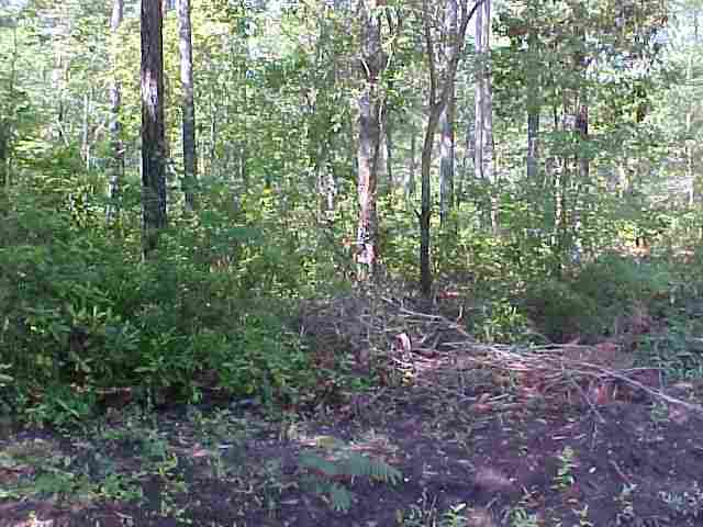 Land for Sale at Hugo Road Hugo Road Conway, South Carolina 29527 United States