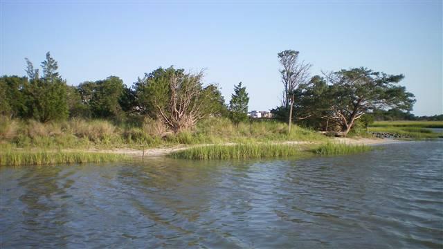 Pawleys Island Birds Nest