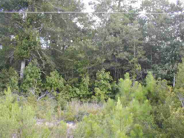 Land for Sale at Hwy 521 Hwy 521 Andrews, South Carolina 29510 United States