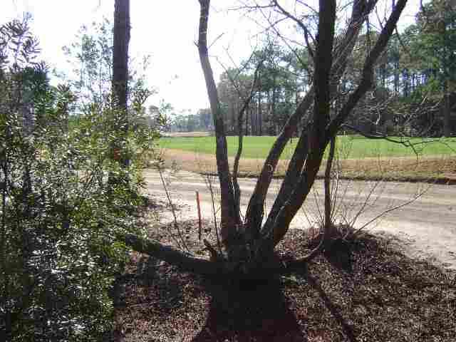 Additional photo for property listing at Lot 5 Section Hagley Drive Lot 5 Section Hagley Drive Pawleys Island, South Carolina 29585 United States