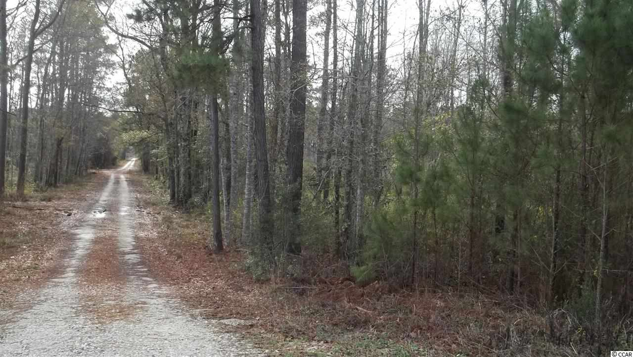 Land for Sale at 88 AC Hwy 521 By-pass Andrews, South Carolina United States