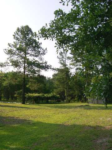 Additional photo for property listing at 37 Acres +/- Highway 905 37 Acres +/- Highway 905 Conway, South Carolina 29526 United States