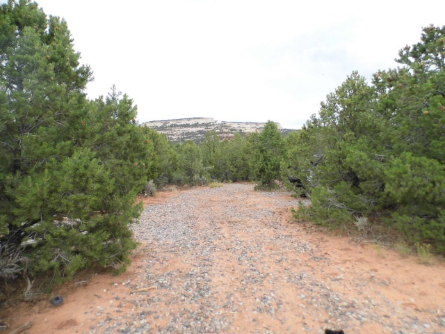 7081 DS Road, Glade Park, CO 81523