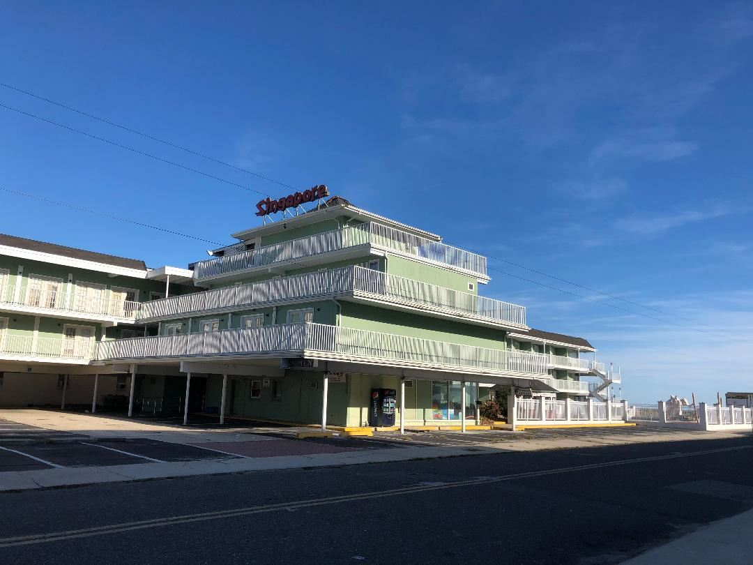 515, Singapore Mo Orchid, Wildwood Crest