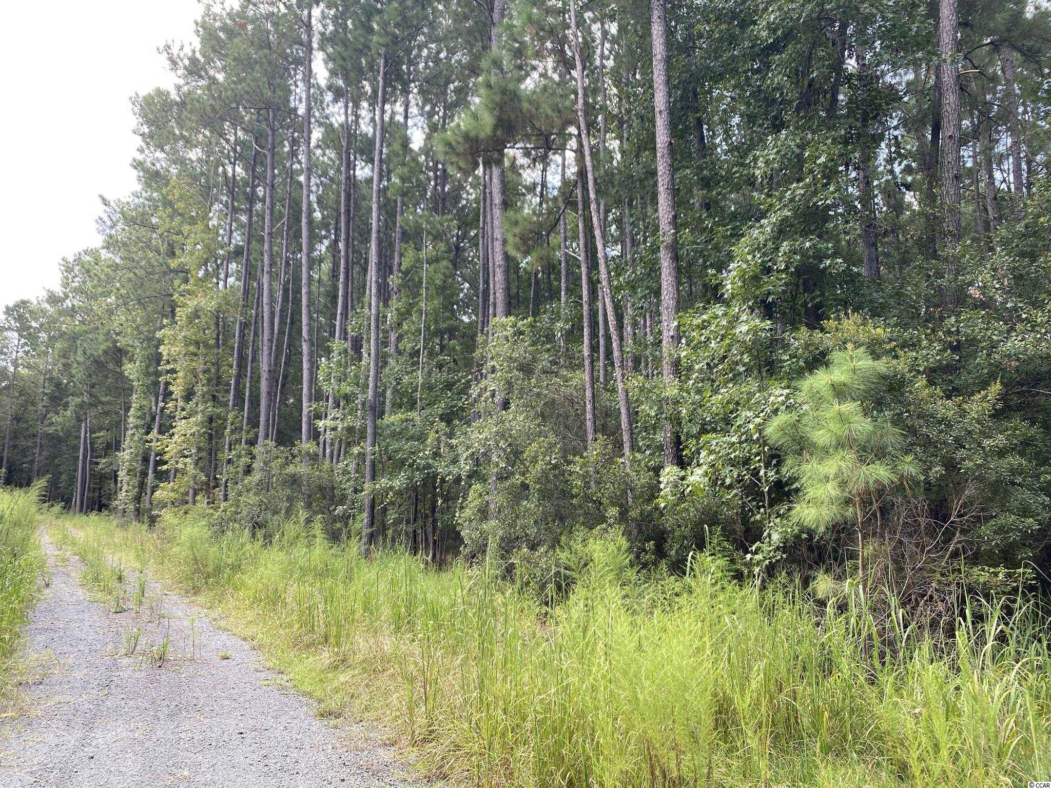 TBD Duany Dr. Georgetown, SC 29440