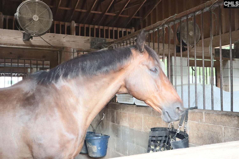 110 Palmetto Stakes Irmo, SC 29036