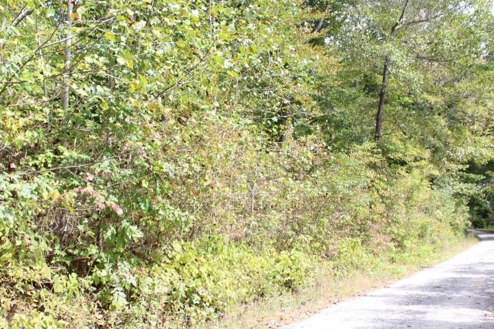 Beautiful lake area lots (will divide). Build your dream home atop a hill and enjoy an amazing view.