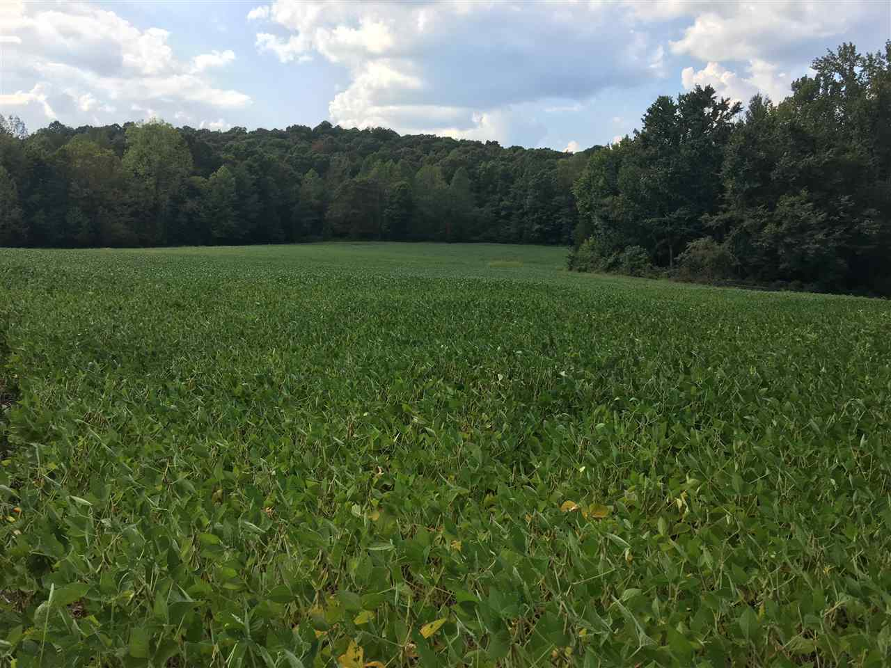 151.516 acres with beautiful building sites, lots of road frontage on two roads, crop land, diversified wooded land loaded with quality deer and turkey hunting. The woods are mostly hardwoods and have the perfect terrain and configuration for great hunting. If you are looking for an investment with all the right ingredients plus only minutes to Bowling Green and the Natcher Parkway, this is it.